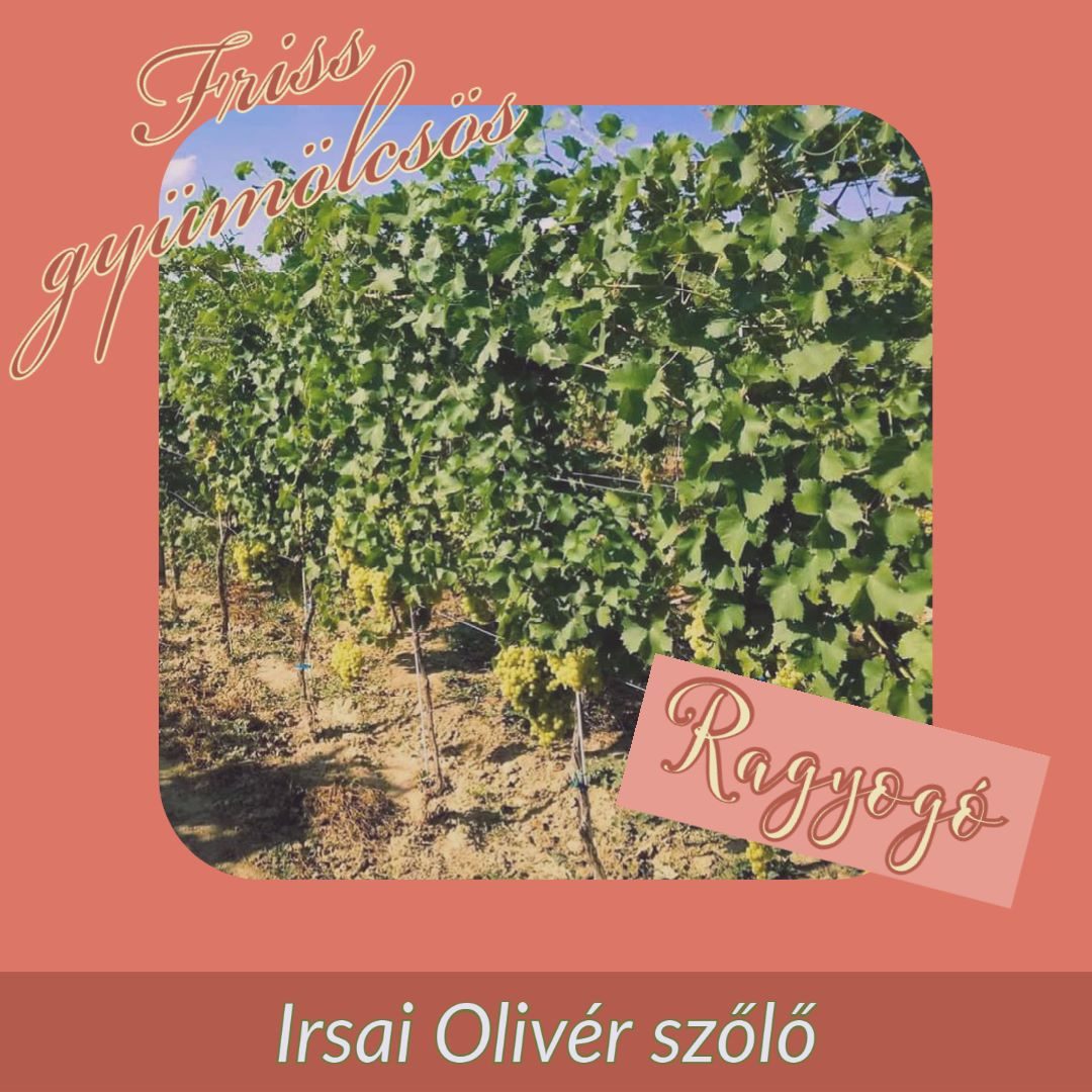 Irsai Olivér szőlő R2 ginhez