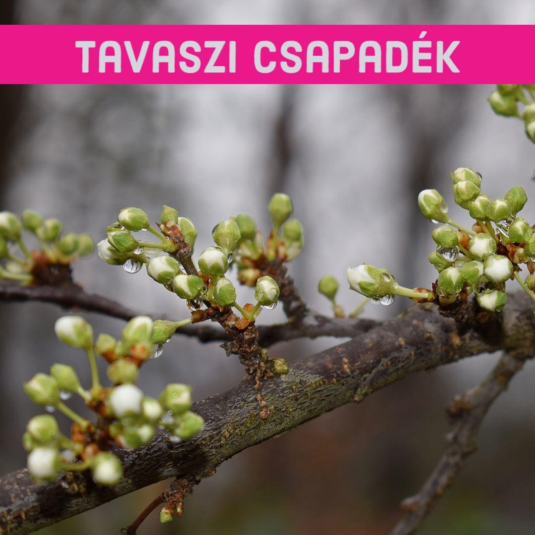 Tavaszi csapadék