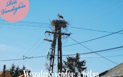 Visszatérő vendég falunkban a gólya