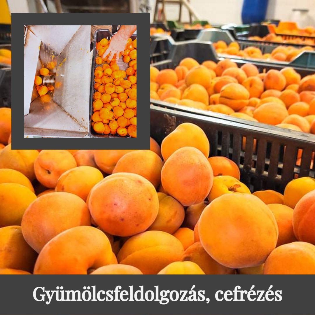 Gyümölcsfeldolgozás, cefrézés